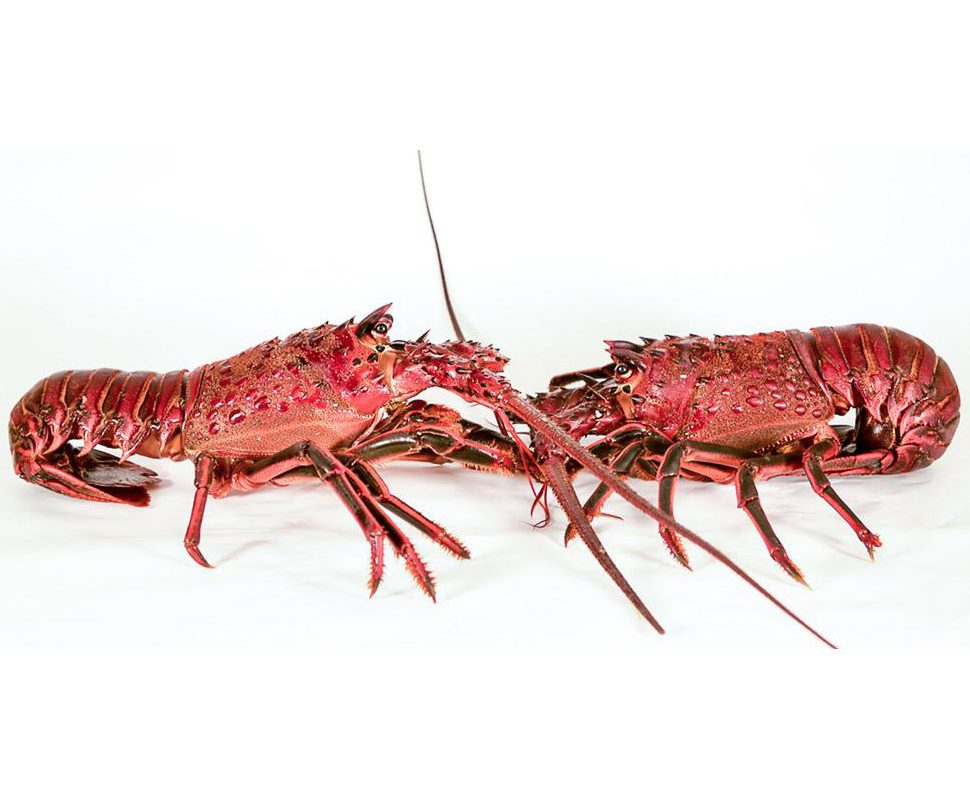 """So you're saying … we should live like lobsters?"" or: Why does politics make us stupid?"
